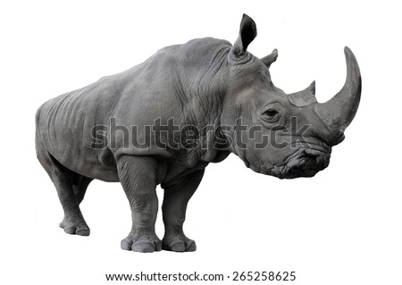 Rhinoceros on a white background
