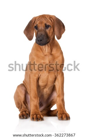 Best Dog Food Rhodesian Ridgeback