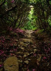 Rhododendron Leaves Cover Appalachian Trail