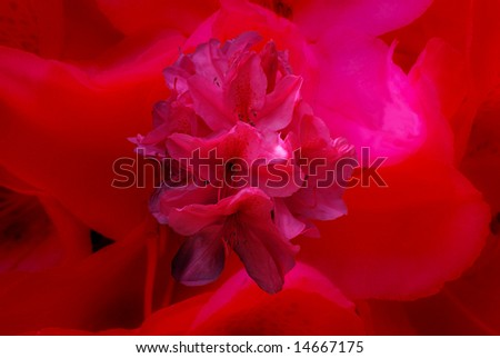 Rhododendron Splash Background