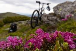 Rhododendrons bloom in a beautiful location in the mountains with MTB Bike in the mountains on a sunny summer day in Carpathian. Mountain bike trip