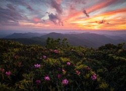Rhododendrons blooming on top of the Blue Ridge Parkway under an amazing sunset