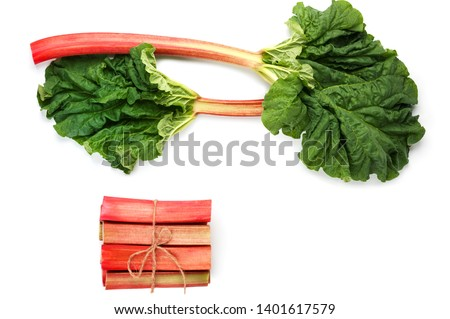 Rhubarb or Rheum vegetable on white background. Leaf of Rhubarb bunch with stalks .