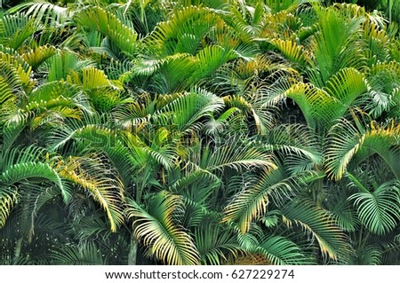 Rhythm of tropical leaves #627229274