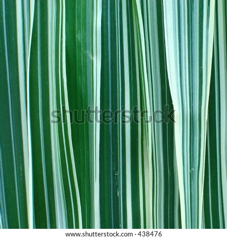 Ribbon Grass Background