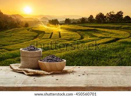 Rice berry in bowl and burlap sack on wooden table with the rice field background