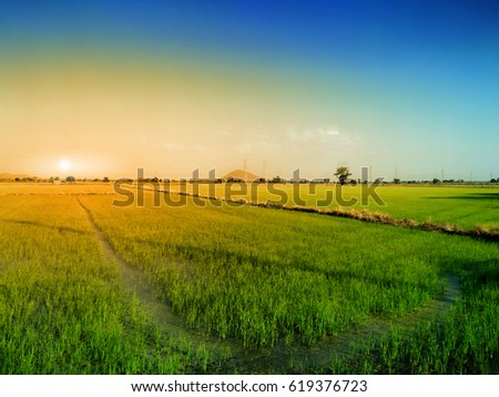rice field and evening background in Thailand. #619376723