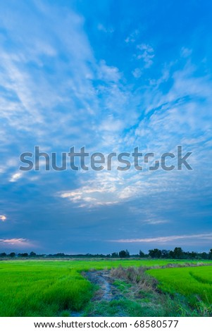Rice field and evening sky