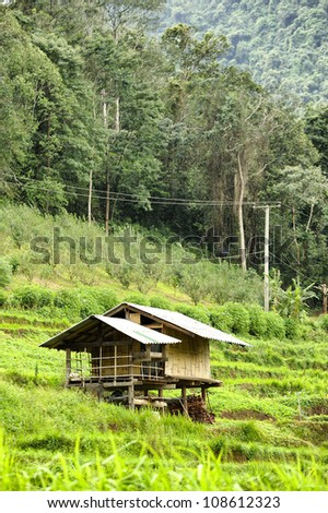 Rice Field and House in Chiangmai, Thailand