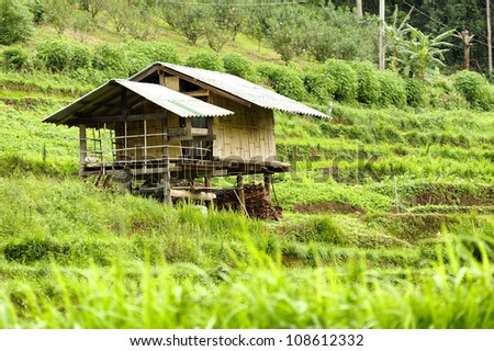 Rice Field and House in Chiangmai, Thailand - stock photo