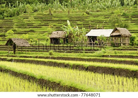 rice field and houses in bali indonesia