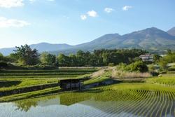 Rice field at May Nagano Japan