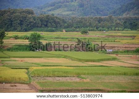 Rice Field at Nan Province, Thailand #513803974