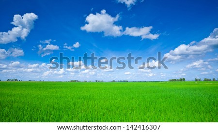 Rice field green grass blue sky cloud cloudy landscape #142416307