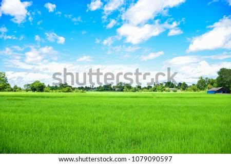 Rice field green grass blue sky cloud cloudy landscape background #1079090597