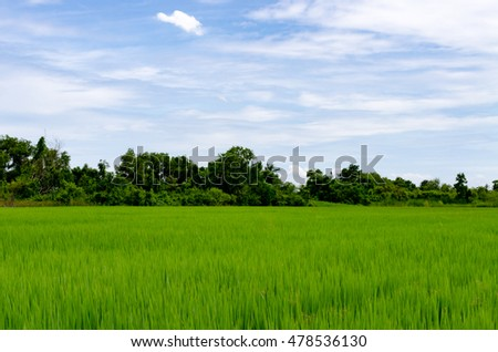 Rice field green grass blue sky cloud cloudy landscape background #478536130