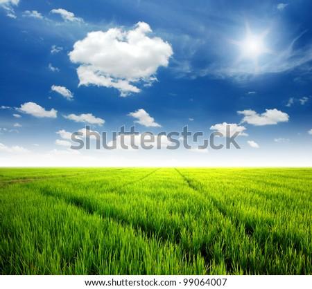 Rice field green grass blue sky cloud cloudy landscape background lawn