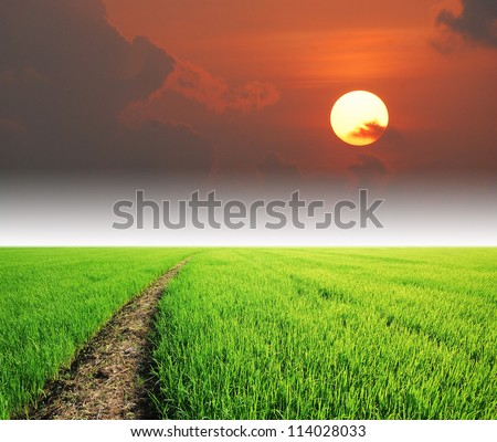 Rice field green grass blue sky cloud cloudy landscape background lawn sunset sunrise
