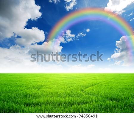 Rice field green grass blue sky cloud cloudy landscape background yellow rainbow #94850491
