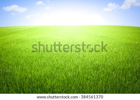 Rice field green grass blue sky with cloud cloudy landscape background #384561370