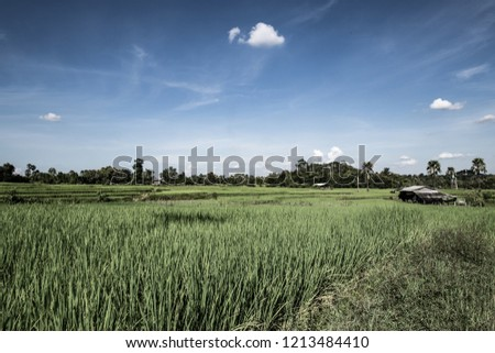 Rice field in Chiangmai province, Thailand. #1213484410