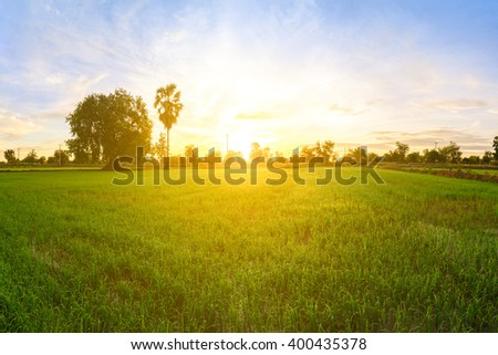 Rice field in morning. #400435378
