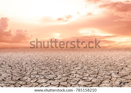Rice field in sunset over dark cloud