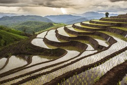 Rice field in Thailand you may find the central of country. /Rice field/ rice field,rice. Thailand,Rice fields in Thailand. Landscape rice field in pa pong pieng , Mae Chaem, Chiang Mai, Thailand
