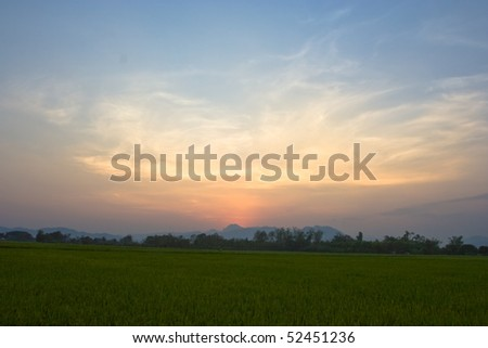 Rice field in the evening in Thailand. #52451236