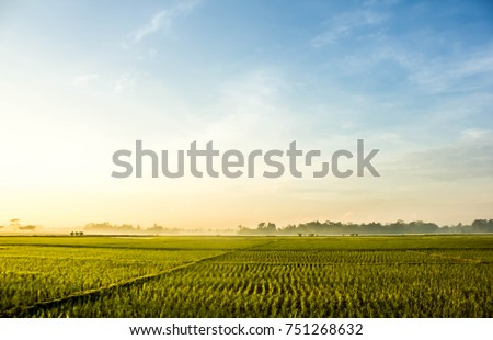 Rice field Landscape #751268632