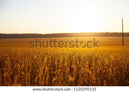 Rice Field Landscape, Paddy Field Landscape, South Borneo Indonesia #1520290133
