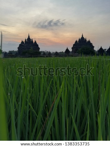 Rice field, morning sky and Plaosan Temple. Plaosan temple is a Buddhist temple that is located in Klaten, Central Java, Indonesia
