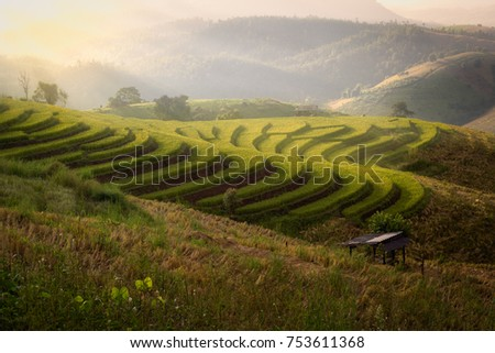 Rice field on terrace during sunset in Chiangmai, Thailand #753611368