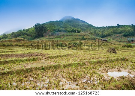 rice field on terraced in mountain. Terraced rice fields in Vietnam.