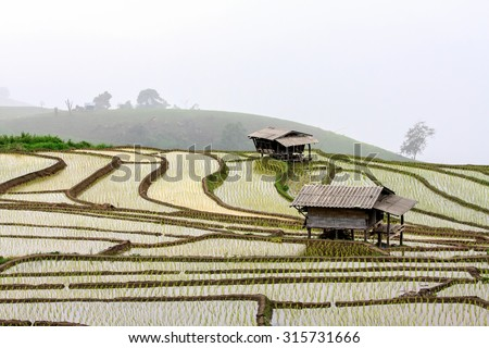 rice field-slow life in asian
