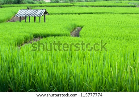 Rice field terraces on mountain in Northern of Thailand. - stock photo
