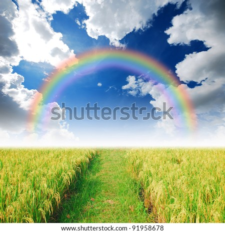 Rice field way on the green field background cloud cloudy rainbow