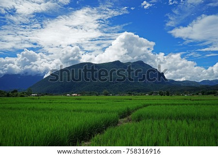 Rice field with mountain view and cloudy blue sky