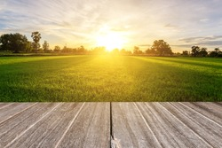 Rice field with vintage style wooden floor perspective in morning.