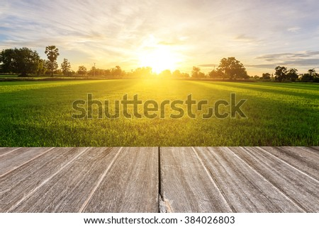 Rice field with vintage style wooden floor perspective in morning. #384026803