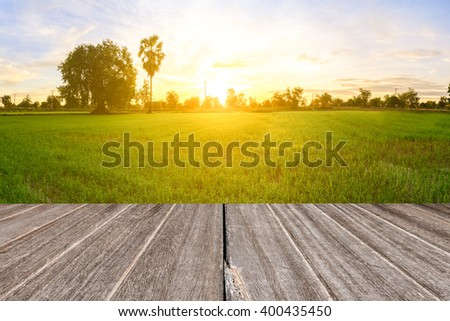 Rice field with vintage style wooden floor perspective in morning. #400435450