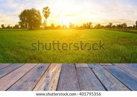 Rice field with vintage style wooden floor perspective in morning. #401795356