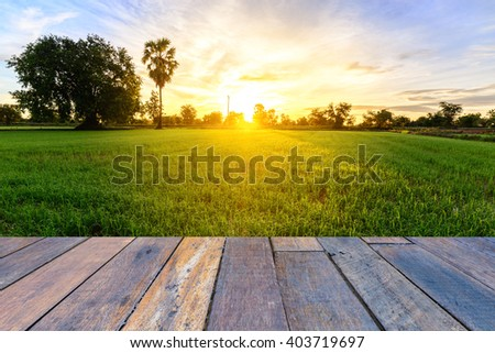 Rice field with vintage style wooden floor perspective in morning. #403719697