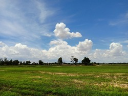Rice fields and daytime skies in Asia