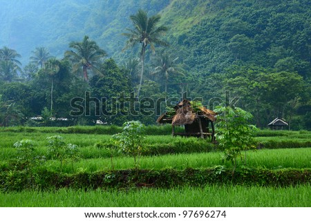 Rice fields and wooden building in mountain. Bali island