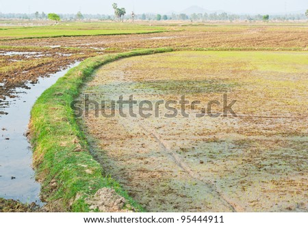 Rice fields at countryside