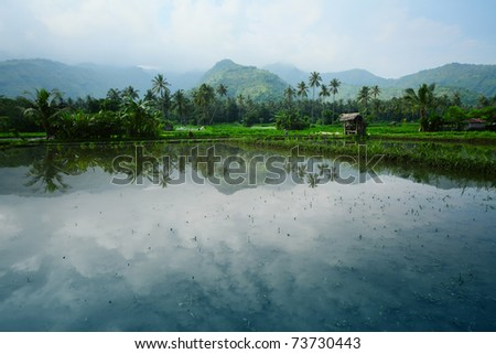 Rice fields filled with water and mountains on a horizon