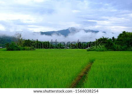 rice fields, green fields and fields.  The background has mountains.  The fresh air in the morning, clear sky with fog, cool weather. #1566038254