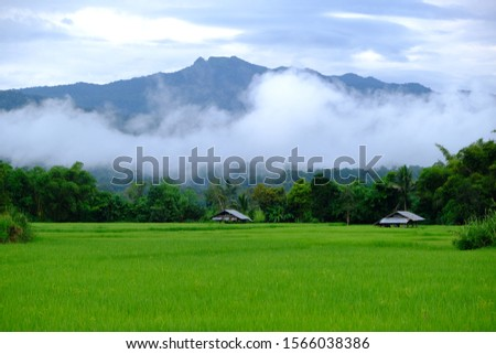 rice fields, green fields and fields.  The background has mountains.  The fresh air in the morning, clear sky with fog, cool weather. #1566038386