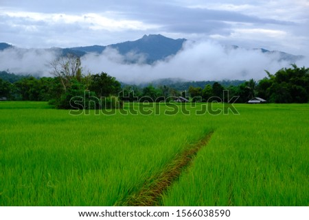 rice fields, green fields and fields.  The background has mountains.  The fresh air in the morning, clear sky with fog, cool weather. #1566038590